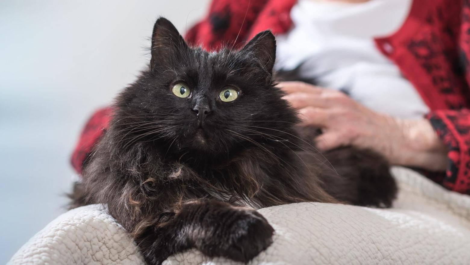 Postoji 5 tipova vlasnika maca: Otkrijte koji ste vi među njima