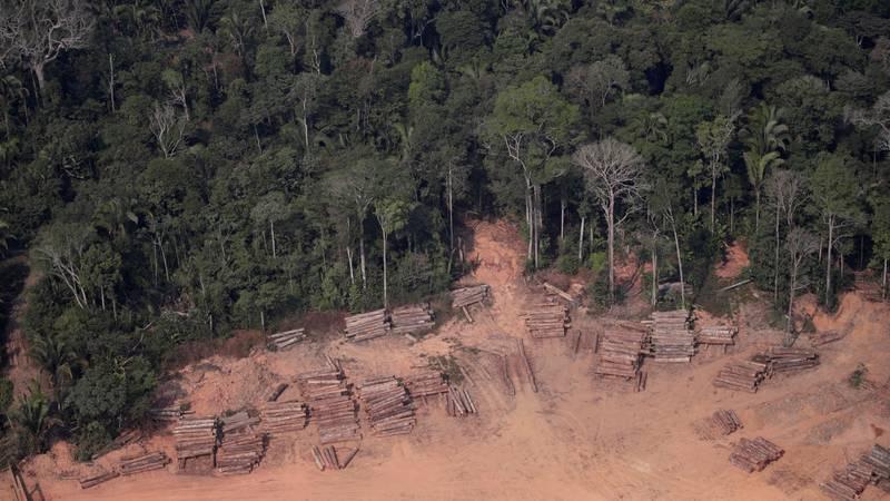 Amazonija sve brže nestaje: 'Stvari su očito izvan kontrole'