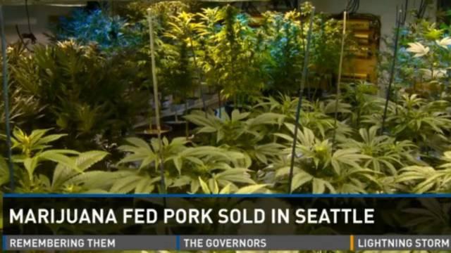 screenshot/9news