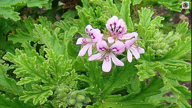 Cvijet koji tjera insekte