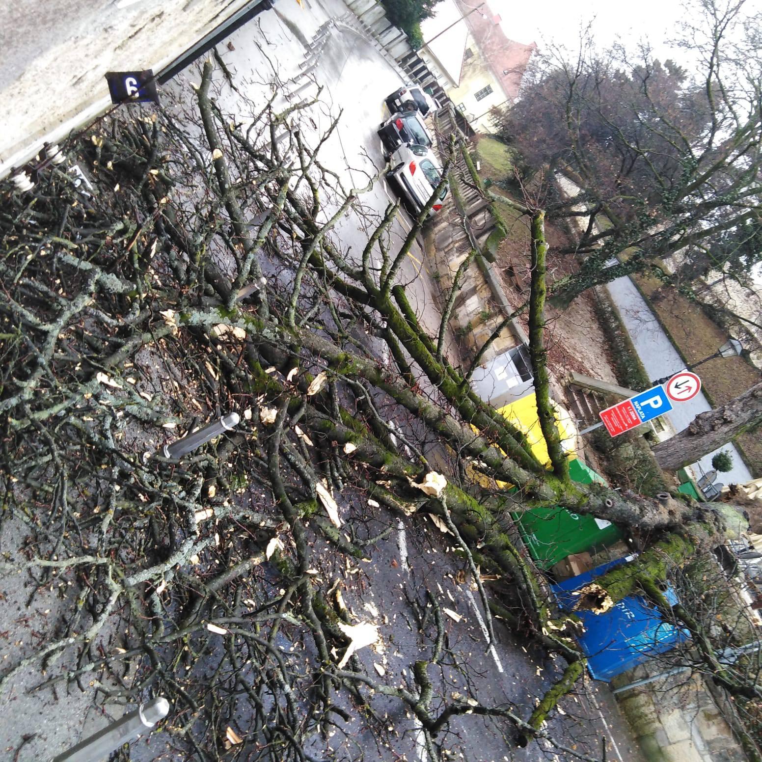 Čuo se prasak: Ogromno stablo srušilo se na ulicu u Zagrebu...