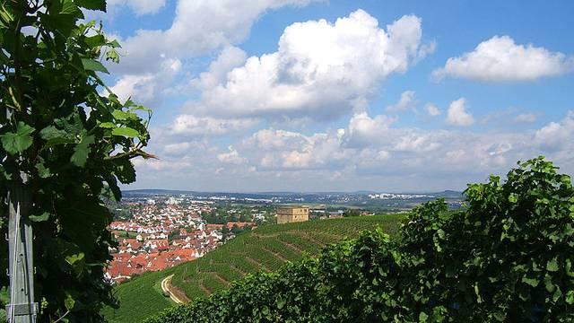 Misteriozan slučaj: Curicu su pronašli zavezanu u vinogradu