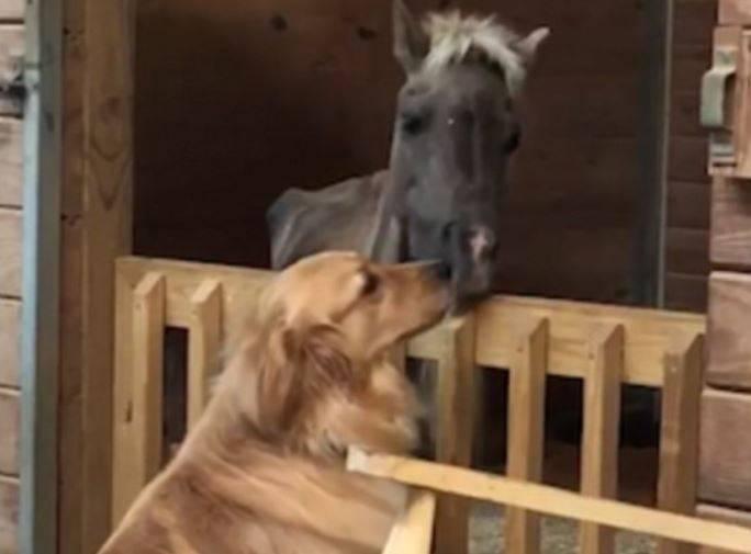 Uhvaćen emotivan trenutak: Nježno prijateljstvo ponija i psa