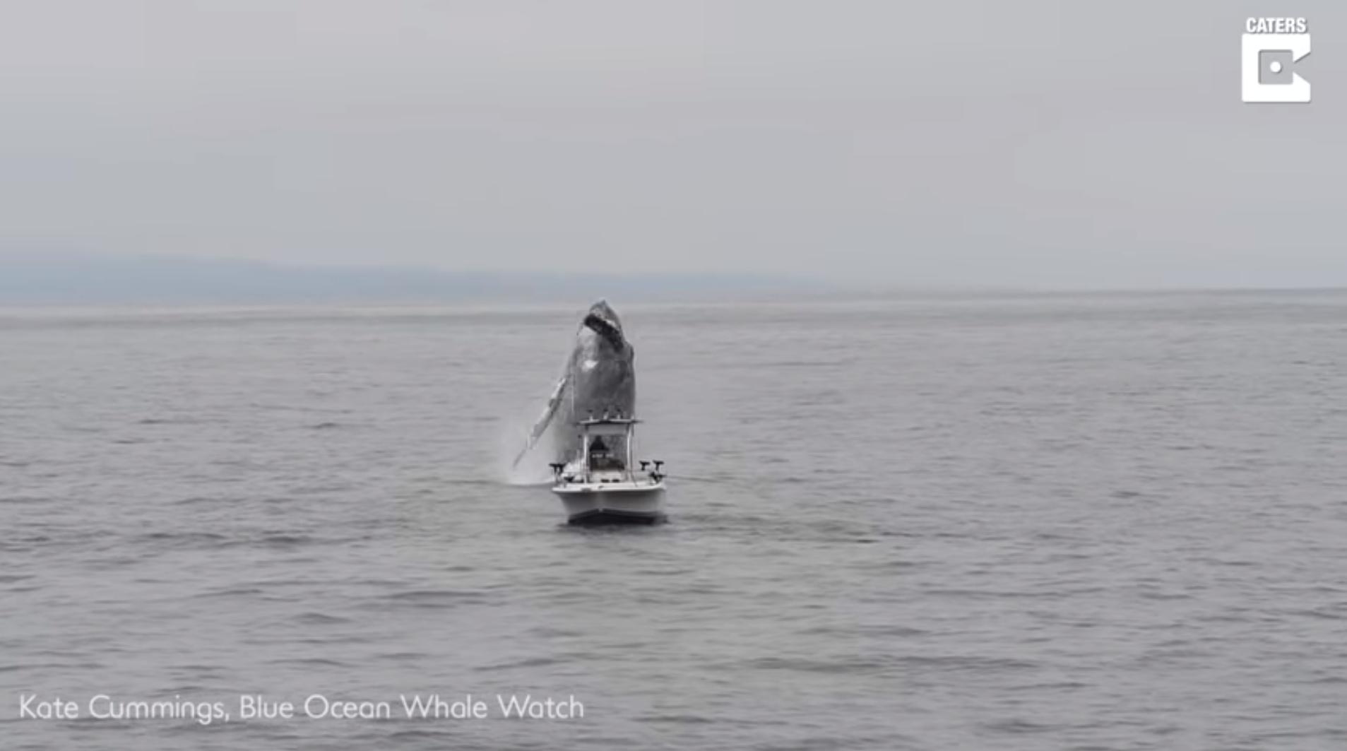 Kit iznenadio ribara: Izronio je kraj brodice i umalo je potopio