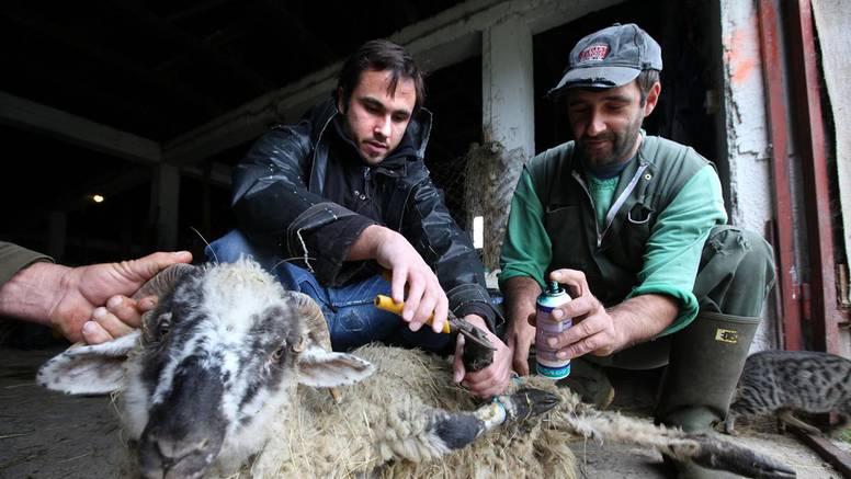 Neće čuvati ovce: Malo im je stan, hrana i plaća 3000 kuna