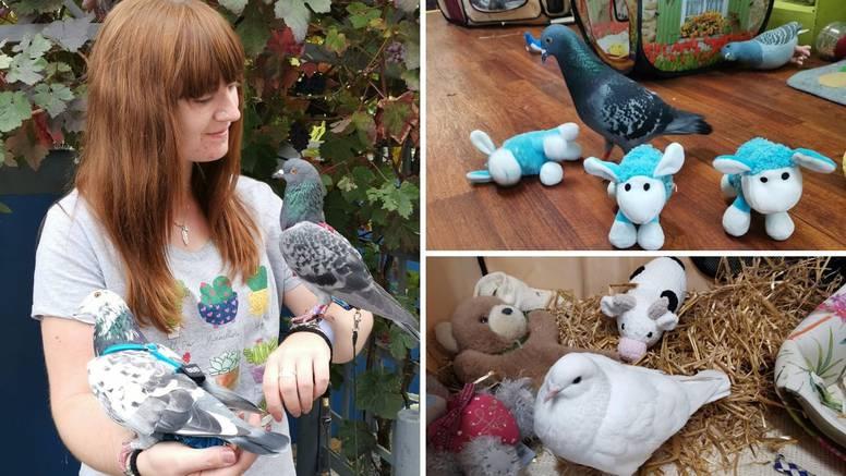 Godišnje potroši 35 tisuća kuna na golubove koji imaju svoju sobu, kolica pa čak i garderobu