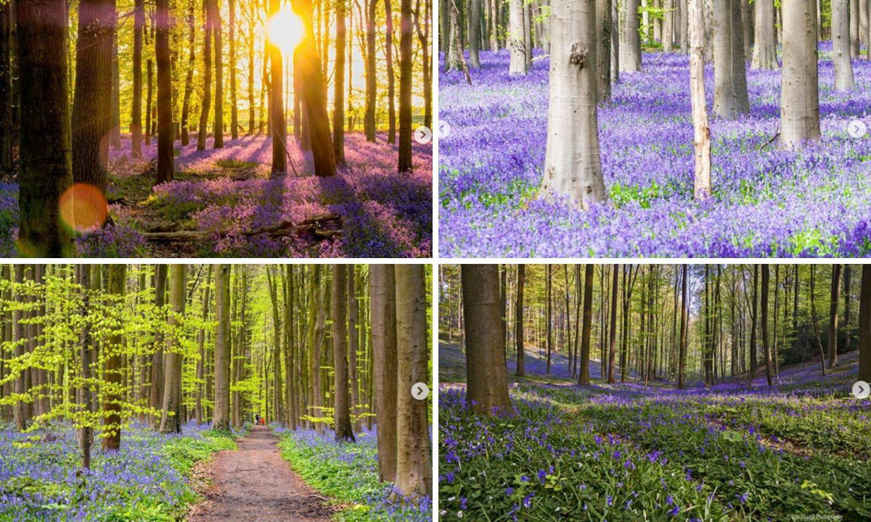Izgleda nestvarno: Ova šuma postoji i oduševljava ljepotom
