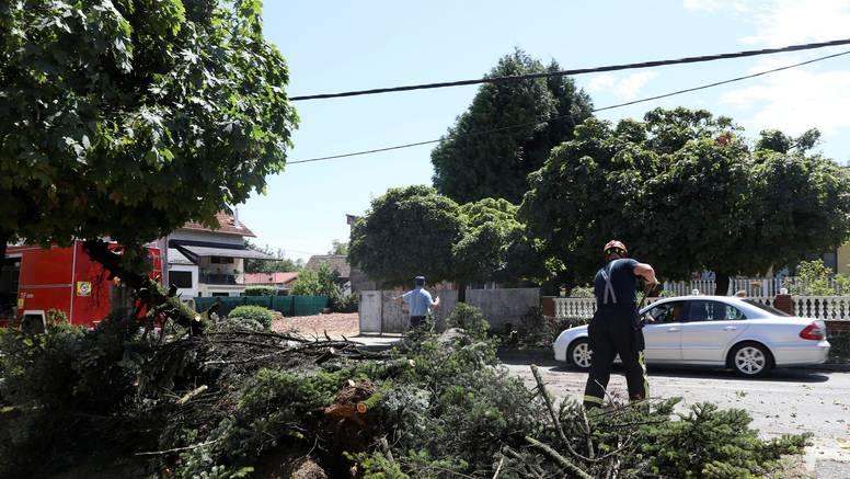 Gradonačelnik Ivan Janković: Najveći problem je urušavanje stabala na kontejnere i stupove