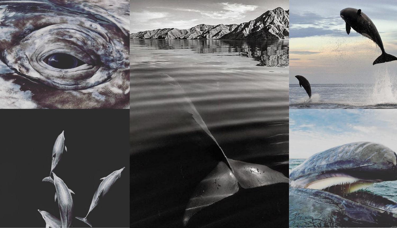 On je šaptač kitovima: Pred njim pokazuju svoje pravo lice