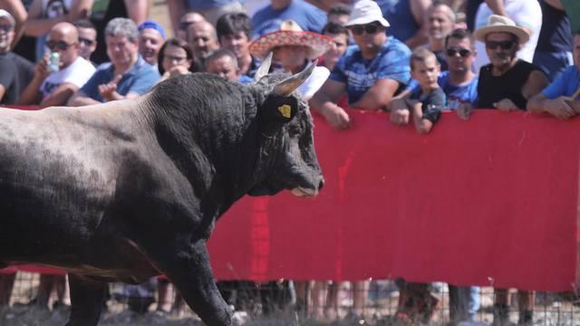 Ričard: 'Puno mi je draže ovo gledati, nego ono u Španjolskoj. Tamo ubiju jadnog bika'