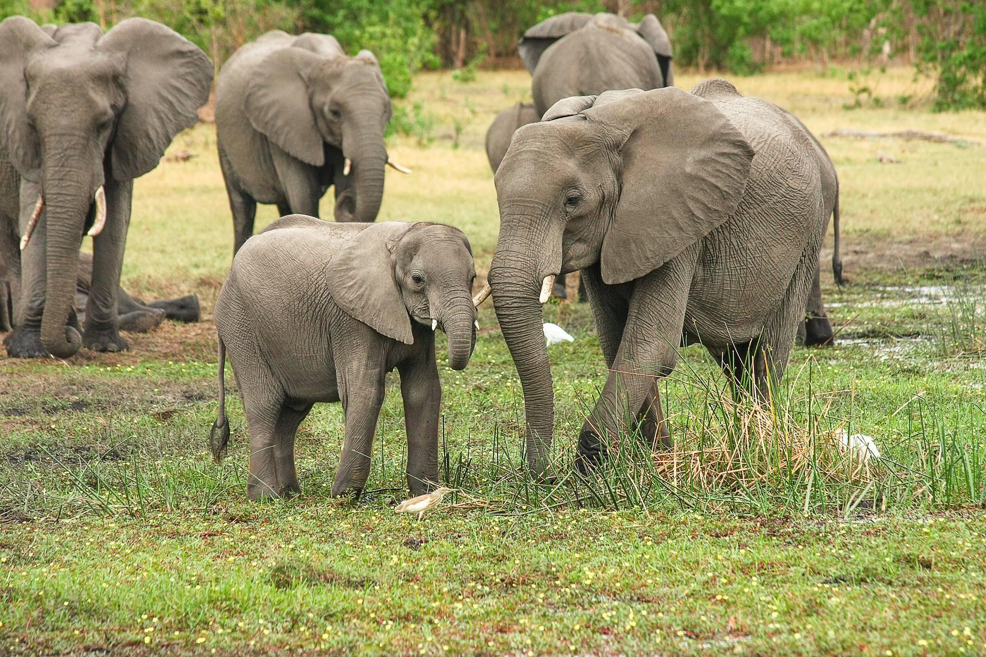 Svake godine na dan smrti slonovi odlaze do njegove kuće