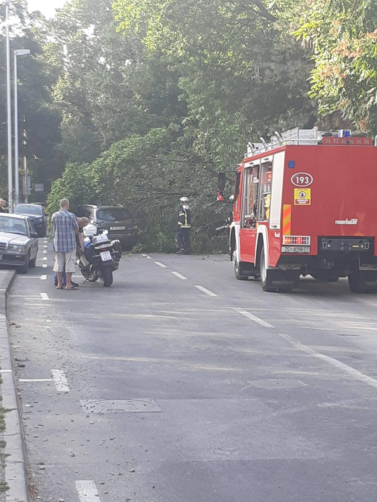 Velika grana pala je na auto u vožnji i razbila parkirani Smart