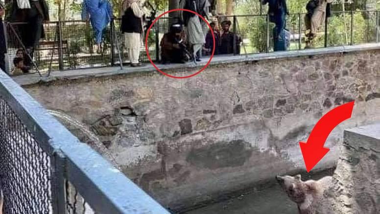 Pojavila se fotografija na kojoj taliban navodno puškom cilja medvjeda u kabulskom ZOO-u