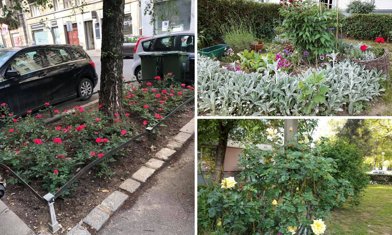 Ljudi stavljaju slike svojih mini vrtova u grupi na Facebooku