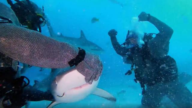 Tyson tri runde s morskim psom u podmorskom 'ringu', nokaut!