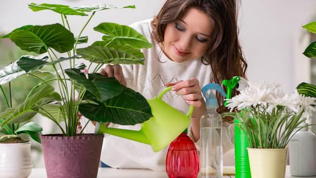 Na svakih 9 m2 stavite jednu biljku i pročistite zrak u domu