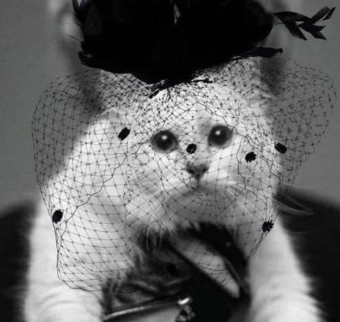 Lagerfeldova maca 'poručila': Slomljena sam srca, jako tužna