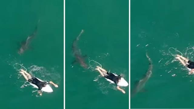 VIDEO Da se smrzneš: 'Bježi van, morski pas kruži oko tebe!'