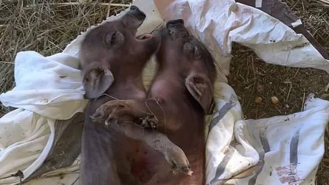 Video: Oprasila je spojene praščiće, a prije tri mjeseca mališana sa šest nogu...