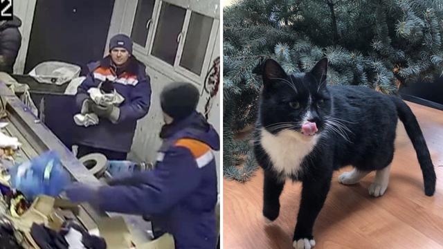 Ruski mačak spašen iz smeća, a onda postao zamjenik ministra