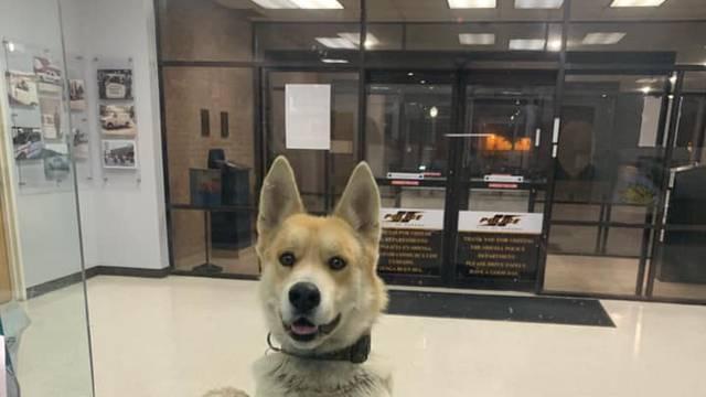 Pas se prijavio u policijsku stanicu: 'Malo sam se izgubio'