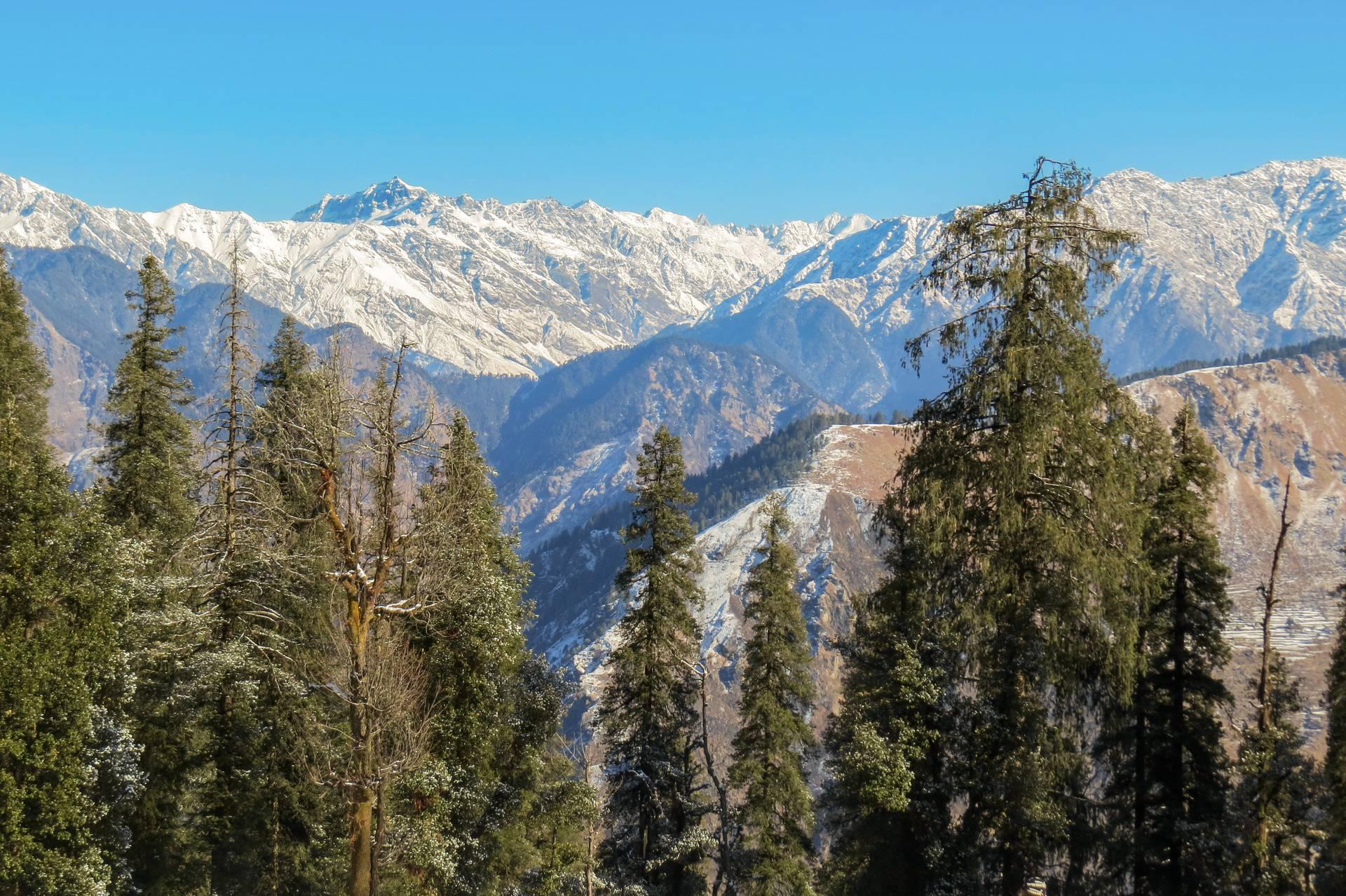 Neobičan himalajski izum koji se pokreće na borove iglice