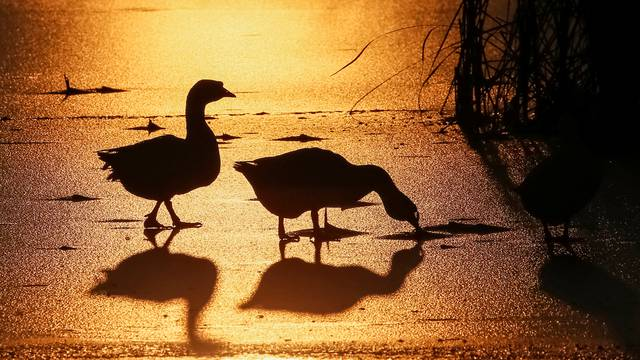 Geese are seen silhouetted against the setting sun at a lake in the village of Peremoha