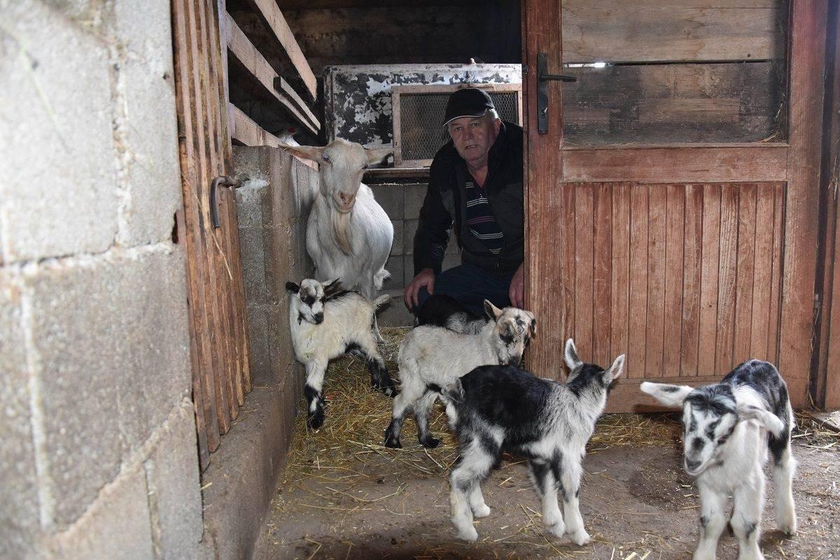 Moja koza ojarila šestorke: Sad im moram novu štalu graditi...