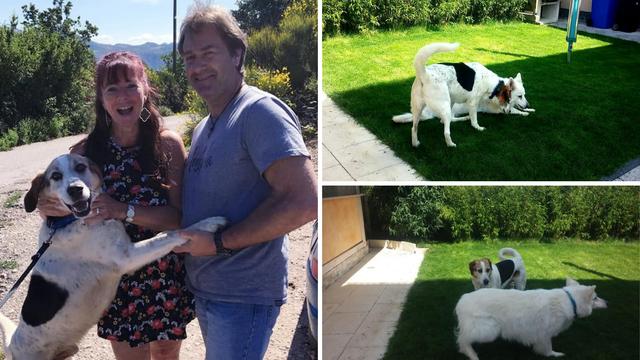 Sreća nakon 7 godina života u azilu: Bobi je pronašao obitelj!