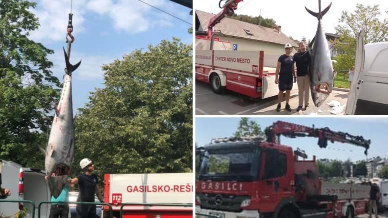 Tunu rekorderku tešku 280 kg ulovljenu u Jadranu dizalicom dopremili u slovenski restoran