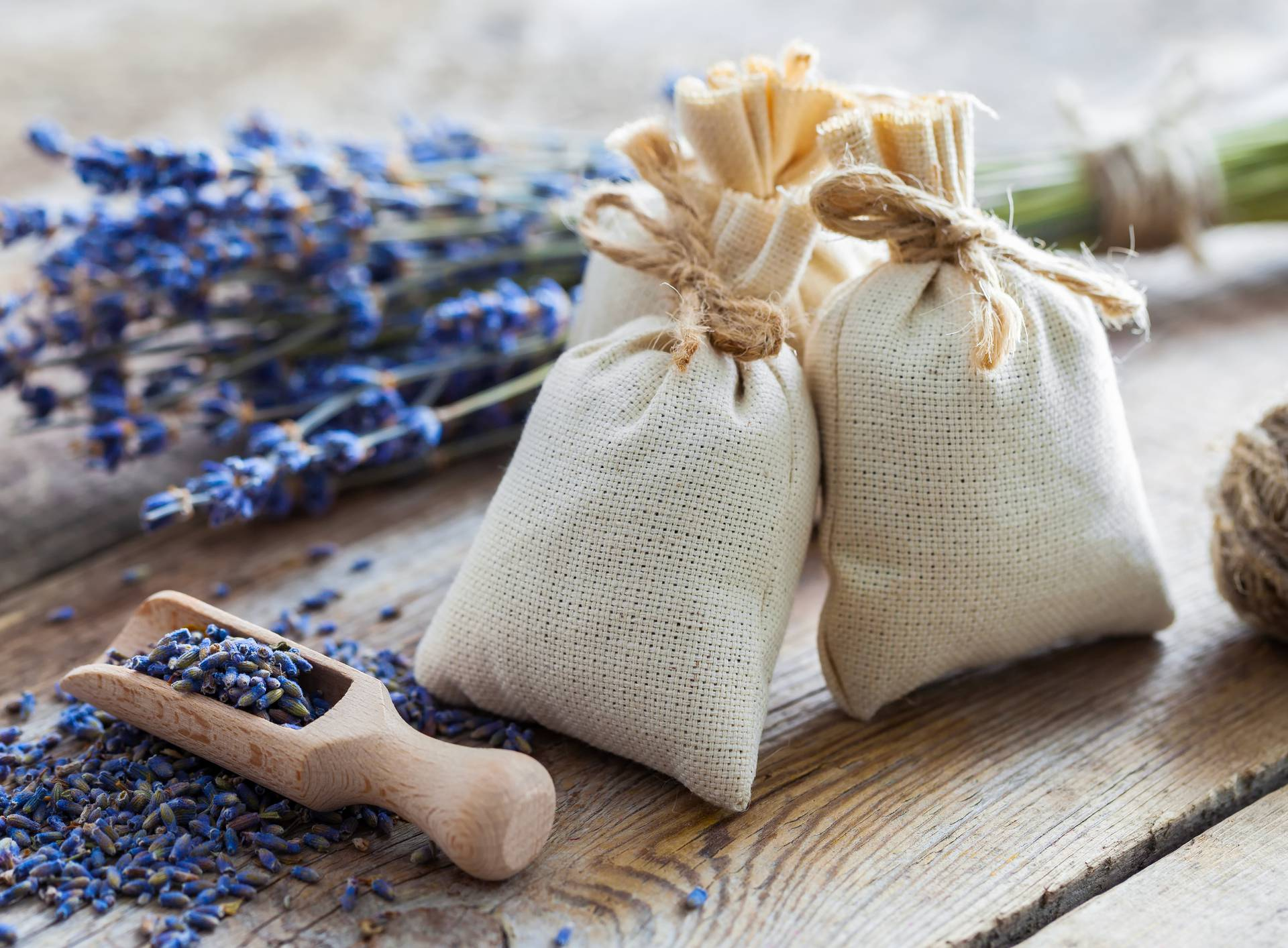 Čudesna lavanda: Recepti za ubode, glavobolju, protiv stresa