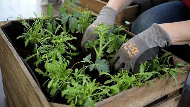 Uzgojite mali vrt na balkonu - eko povrće i začini su najbolji