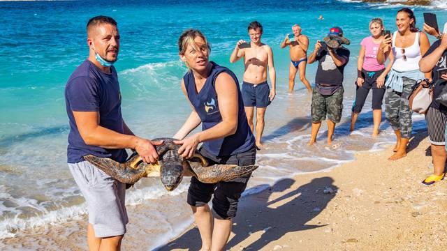 Pula: Povodom Svjetskog dana zaštite životinja, Aquarium Pula vratio oporavljene glavate želve u more