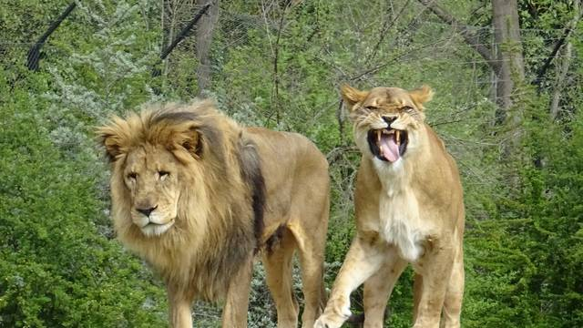 Na Uskrsni ponedjeljak ZOO počastio životinje pisanicama