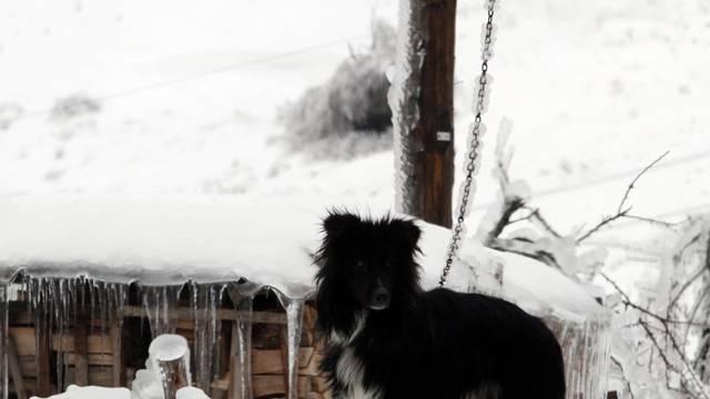 Peticiju protiv držanja pasa na lancu potpisalo već 30.000 ljudi