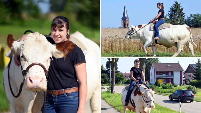 Umjesto na ispašu, krava Melina se prešetava po selu: Za vjenčanja i zabave vuče i kočiju