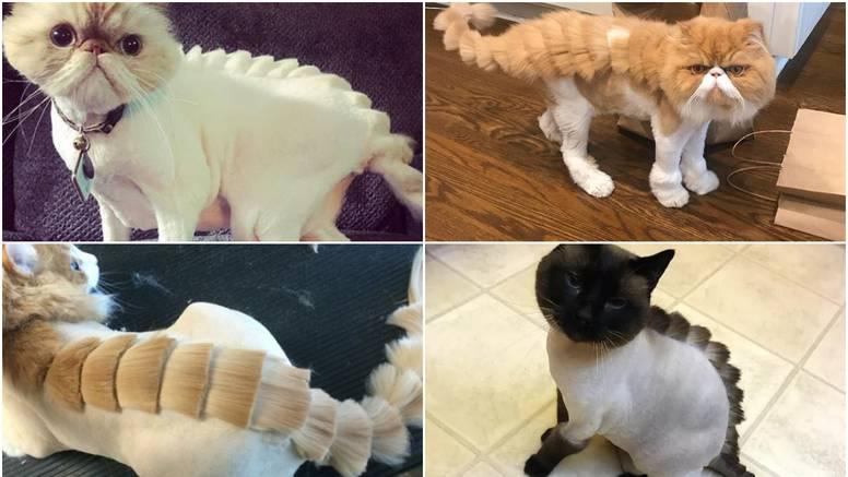 Novi trend: Vlasnici frizurama mačke pretvaraju u dinosaure