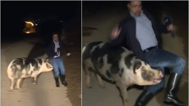 Kuda ide divlja svinja? Rok rok, ganja novinara pred kamerama