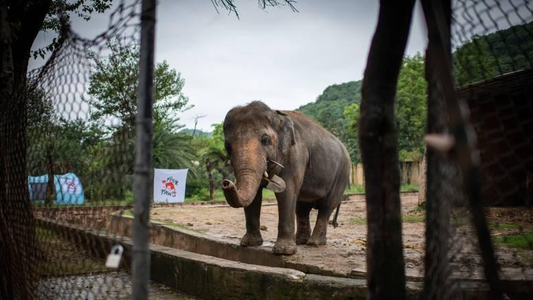 'Najusamljeniji slon na svijetu' napokon smije otići iz Pakistana