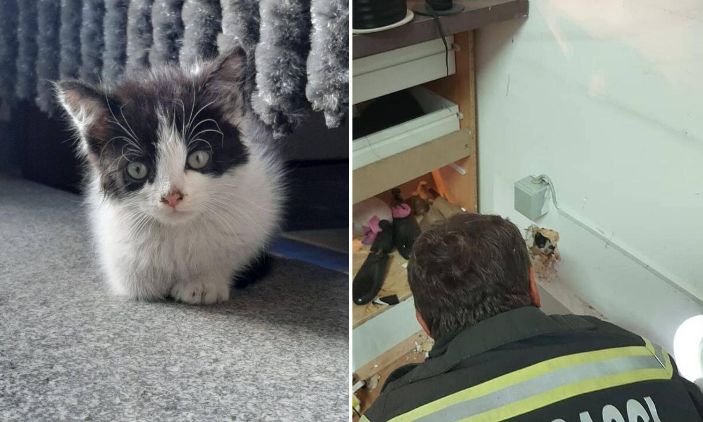 Mačić zapeo u zidu šivaonice, vatrogasci bušili zid da izađe...