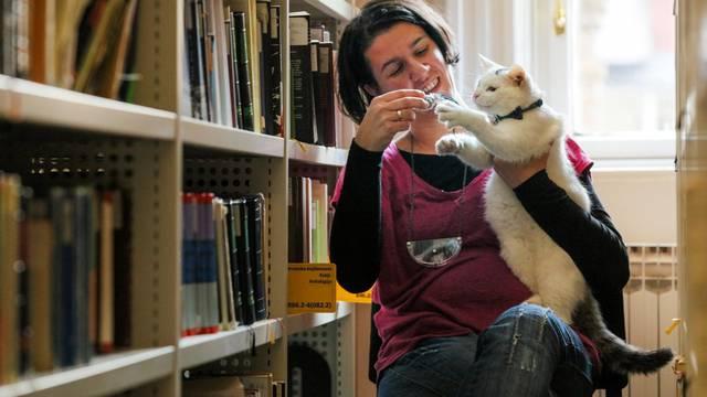Čupavi knjižničar u Osijeku: Ja sam mačak Đivo i čuvam knjige
