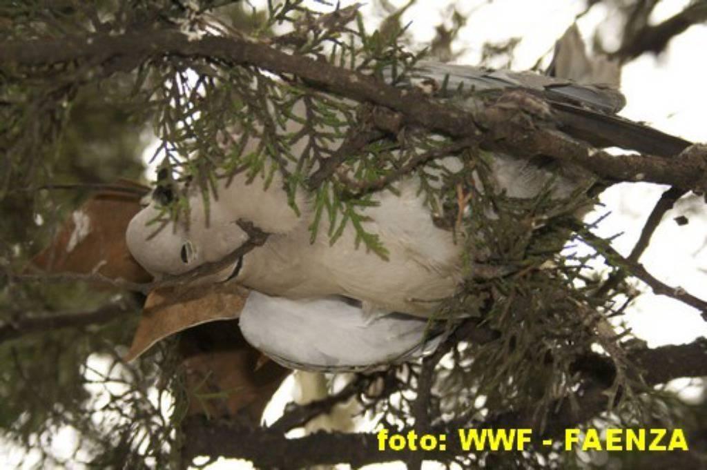 WWF Faenza