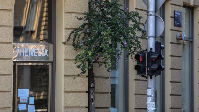 Zagreb: Drvo raste iz zgrade u centru grada