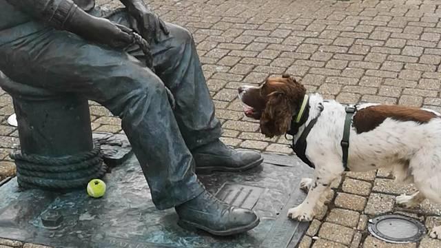 Preslatki pas lopticu uporno nosi kipu - i čeka da mu je baci