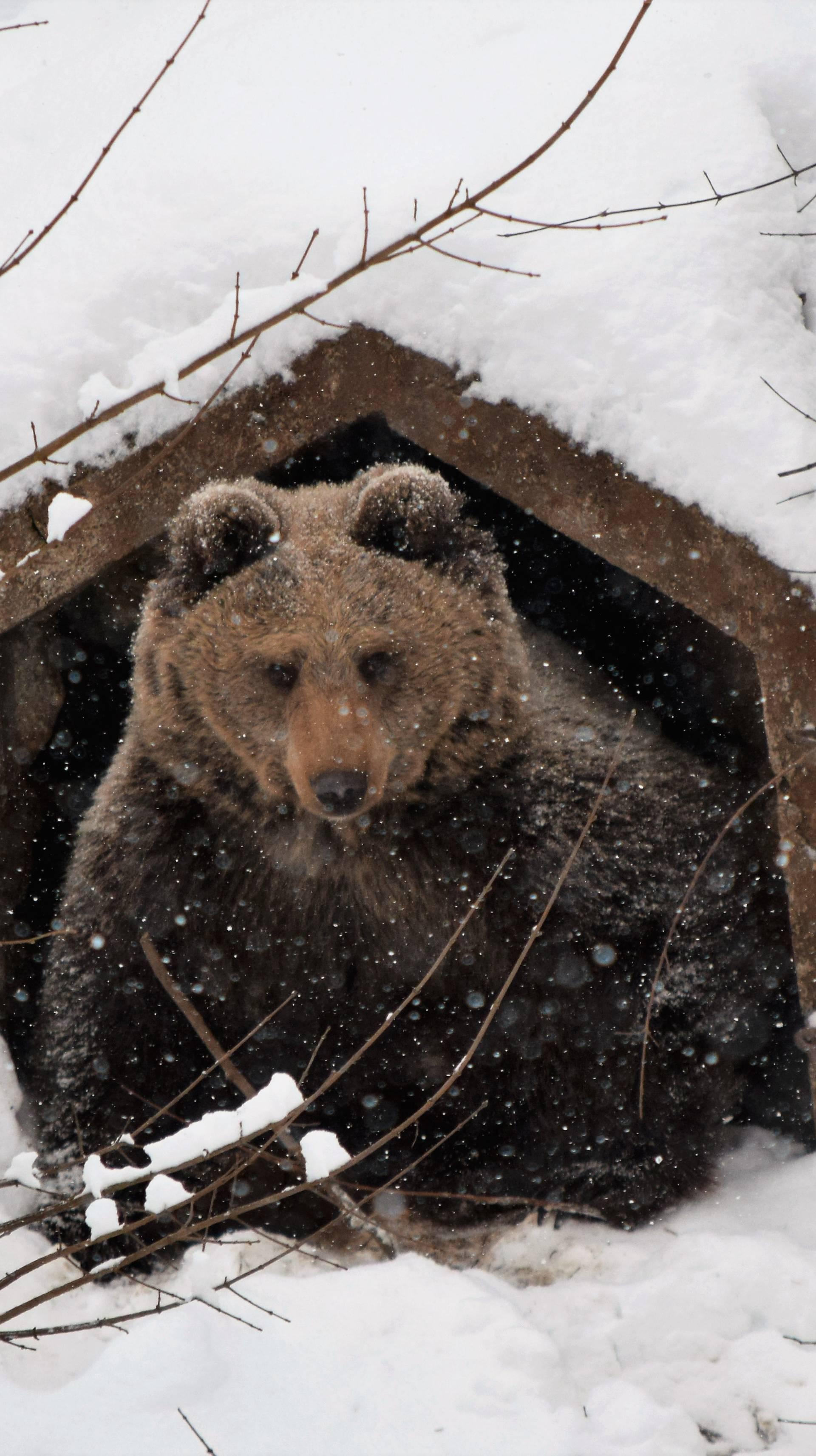 Idila u Kuterevu: Medvjedi jure van čim se pojavi zubato sunce