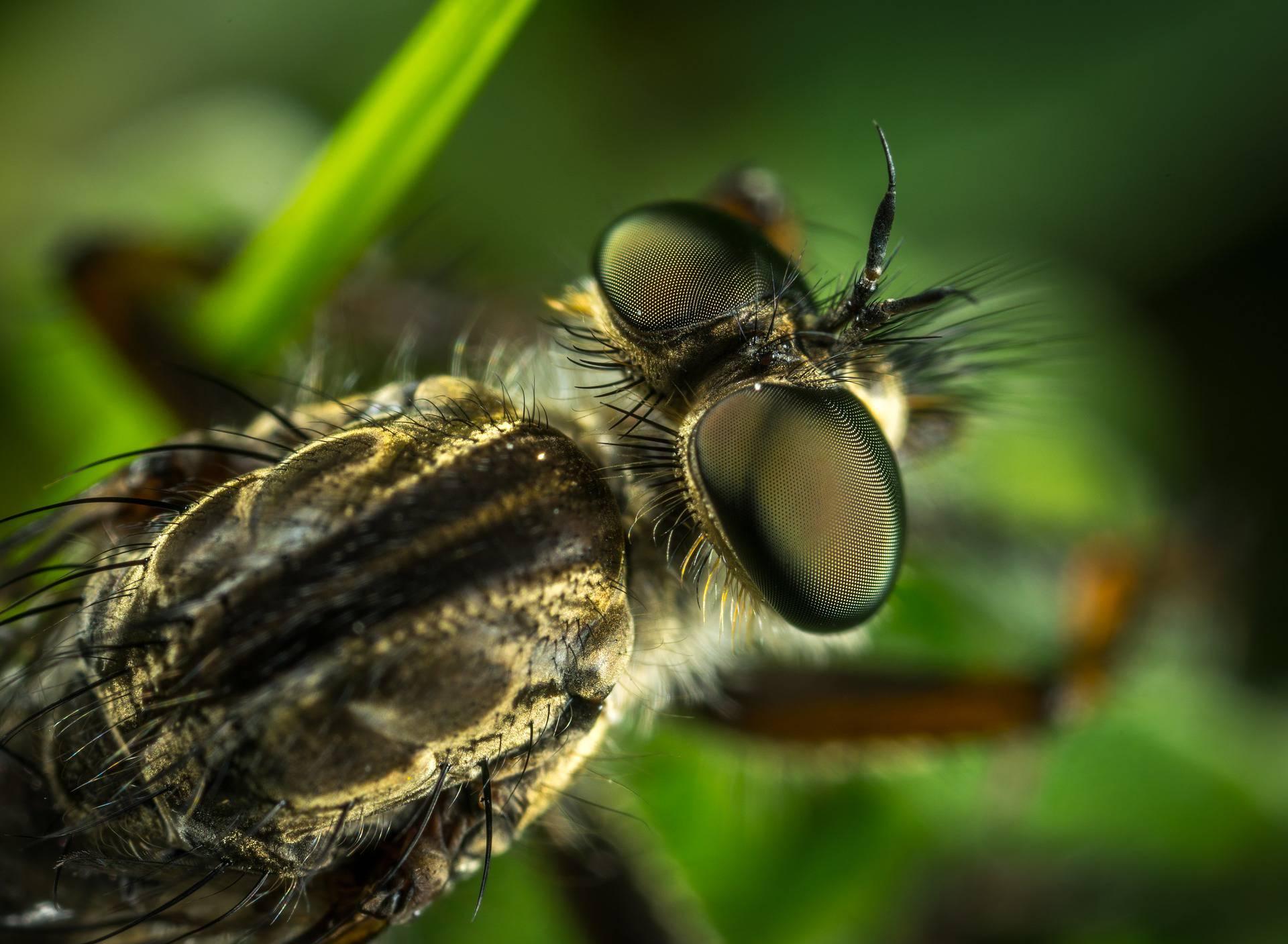 'Umirat' ćemo od vrućina, ali i zbog kukaca: Pojest će hranu!