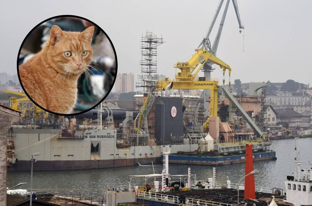 Apel radnika Uljanika: 'Imamo 200 maca, nema hrane za njih'