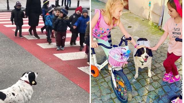 Pas iz Gruzije svaki dan čuva djecu iz vrtića dok prelaze cestu