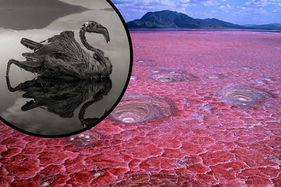 Misterij 'bazena smrti': Sve što kroči u njega pretvara u kamen