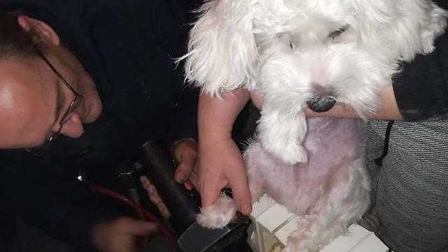 Izvukli su ga vatrogasci: Psu je noga zaglavila u radijatoru